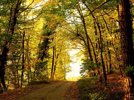 Hörweg – mit dem Ohr unterwegs im Dieburger Forst